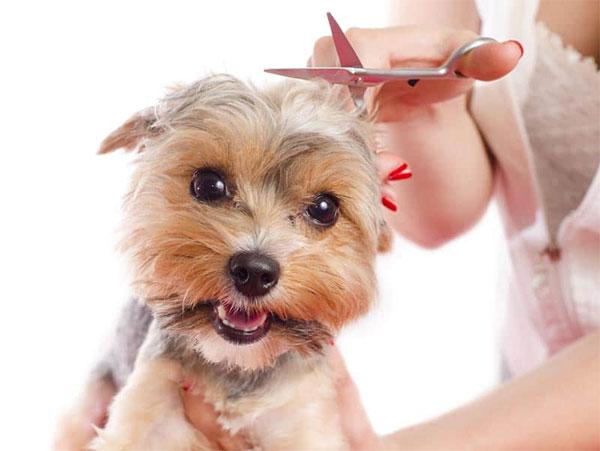 Dog grooming MN