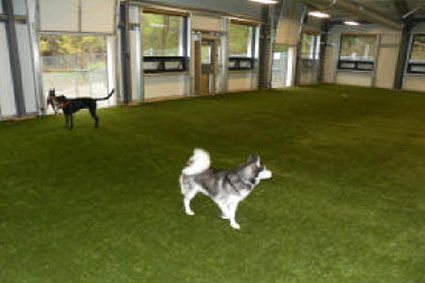 Indoor-dog-play-area.jpg
